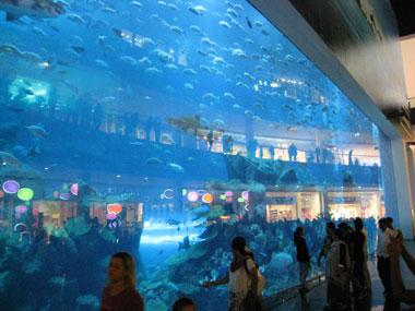 Frontscheibe des Aquariums